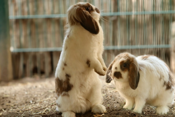 house rabbits having fun